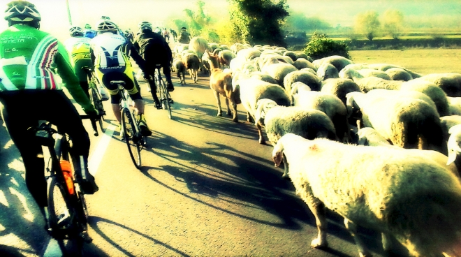 bici_pecore